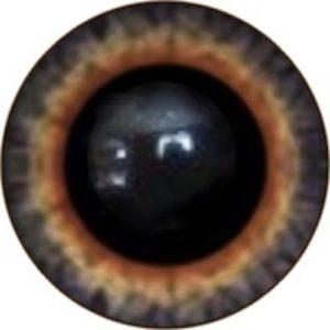 134A Eye