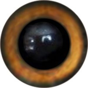 148A Eye
