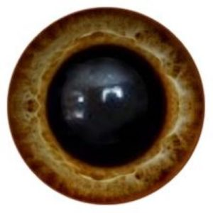 181A Eye