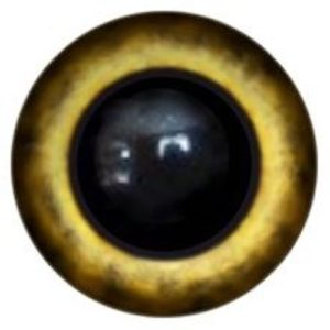 183A Eye