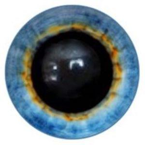 186A Eye
