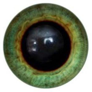 195A Eye