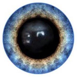 229A Eye