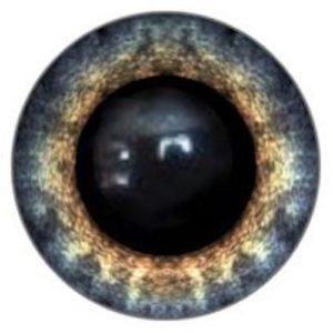 230A Eye